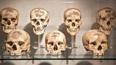 Menselijke schedels in het Nederlandsch Historisch Natuurwetenschappelijk Museum Boerhaave in Leiden.