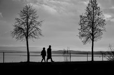 Free photo: Silhouettes, Tree, Man, Market - Free Image on Pixabay ...