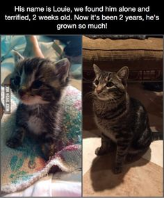 """Reminds me of my baby. I found him in a garbage can at the same size . Now he looks like the cat on the right. My """"fur baby"""" is soooo spoiled now, he rules our house and we love it!"""