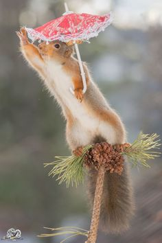 Photographer Captured Squirrels Every Day For 6 Years And Here Are The Amazing Results Squirrel Pictures, Funny Animal Pictures, Baby Animals, Funny Animals, Cute Animals, Red Squirrel, Hello Spring, 6 Years, Cute Puppies
