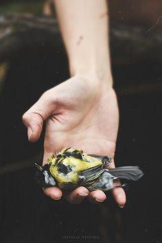 Voiceless bird by NataliaDrepina.deviantart.com on @deviantART