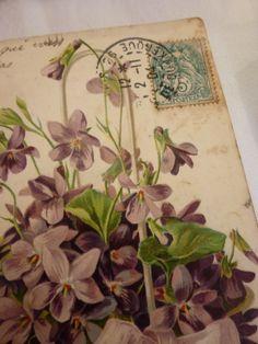 Dans le langage des fleurs et depuis des siècles, la violette symbolise la modestie et l'humilité dans tout ce qu'il y a de plus tendre et respectueux.