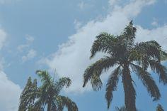 Tropical 🌴🌴🌴