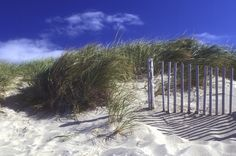 The dunes in Cape Cod
