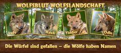 Sie haben Namen! Endlich haben unsere Wölfe in der Wolfsblut Wolfslandschaft Namen bekommen. Sie heißen Lady, Hawk, Timber und Odin. Wenn Ihr die vier besuchen wollt, findet Ihr sie im Wildfreigehe Wildenburg.