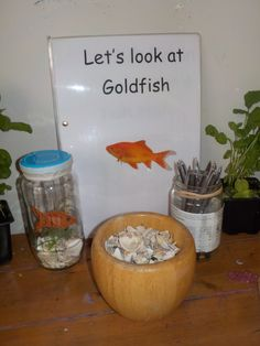 Goldfish Observation Station at Chadwell Pre-school