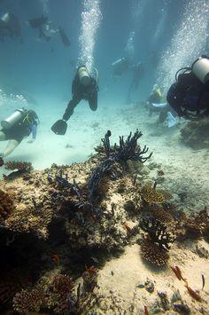 scuba diving maldives   http://reservasbuceo.es/buceo-en-maldivas