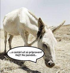 Vieme prečo neprišiel Martin na bielom koni! Všetky dôvody tu - http://www.funradio.sk/novinky/27929-10-dovodov-preco-dnes-neprisiel-biely-kon/