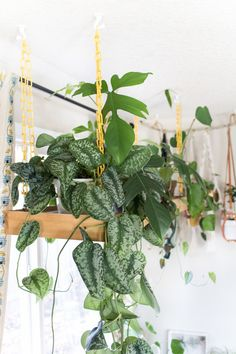 Great idea for hanging multiple plants in front of a window.
