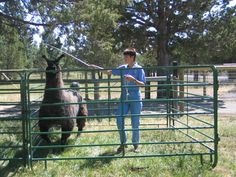 When working with a frightened animal or one that runs when you approach use a… Lama Lama, Llama Alpaca, Home On The Range, Small Pen, Hobby Farms, Small Farm, Farm Life, Farm Animals, Goats
