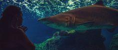 Our JAWS! @Cretaquarium @myhersonissos @DiscoverGRcom @HuffPostScience @VisitGreecegr