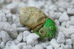 birth of a chameleon