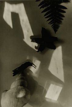 Jaromir Funke ~ Shell, Starfish, Fern, Bird,c.1930 Still Life Photography, Vintage Photography, Art Photography, Camera Techniques, Shadow Play, Abstract Photos, Photomontage, Double Exposure, Light And Shadow