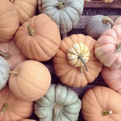 "Pumpkins! (Not sure they totally count as ""flora,"" but still...) photo by albert co shop"
