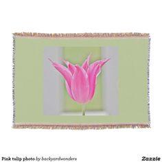 Pink tulip photo