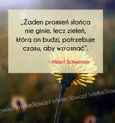 Żaden promień słońca nie ginie... #Schweitzer-Albert,  #Czas-i-przemijanie, #Przyroda-i-zwierzęta, #Życie