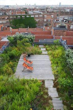 allée de jardin en dalles et beaucoup de plantes vertes sur le toit-terrasse