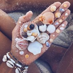 Big shells, little shells, itty bitty shells, and shells in shells. I love shells. And If they could talk, I'm sure they would have a… Beach Aesthetic, Flower Aesthetic, Summer Aesthetic, Aesthetic Collage, Aesthetic Drawings, Blue Aesthetic, Aesthetic Fashion, Summer Pictures, Beach Pictures