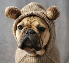 Roux, the French Bulldog, looks so cute in her monkey sweater