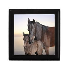 A mare and her baby foal gift box