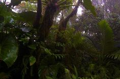 Elfin Forest Saba Dutch Caribbean