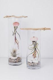Tillandsie Airplant Tillandsia Pflege Care Dekoration Jellyfish Mobile Qualle DIY Terrarium Bromelie Himmeli Tillandsien Schnecke