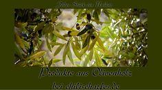Zu den Olivenholzprodukten Stock Photos, Timber Wood