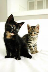 Katzenschnupfen Hausmittel Gegen Katzenschnupfen Katzen