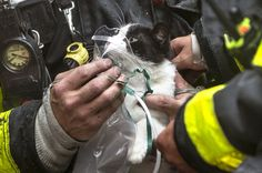 Firefighters Rescue Cat from Burning Home