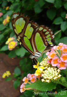 Malachite | Flickr - Photo Sharing!