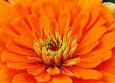 Sea of Orange by Bruce Bley