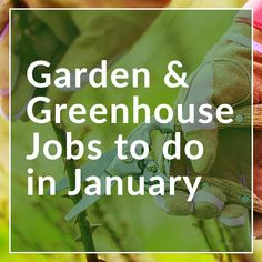 As we put the chaos of Christmas behind us and bring in the New Year, now's a great opportunity to get planning for the new growing seasons and get in the garden to get those early January jobs done.  Clear away fallen leaves Keep your garden tidy by clearing away leaves which have fallen over the Christmas period.  Read full article  https://norfolk-greenhouses.co.uk/blog/garden-greenhouse-jobs-to-do-in-january/