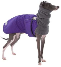 Italian greyhound coat made of Materials: ultrex, polar fleece, Velcro by Voyagersk9Apparel