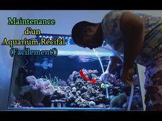 Aquarium Terrarium, Change Management