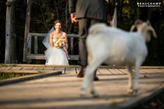 More Images, Park Weddings, Wedding Photos, Horses, Photography, Animals, Marriage Pictures, Animales, Animaux