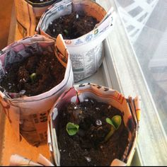 Newspaper plant pots!  Just use what you get or recycle others.  When ready, plant into the ground, pot and all.