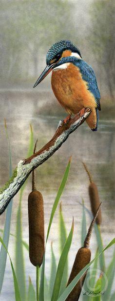 Kingfisher (SOLD). Nigel Artingstall British - Wildlife Artist