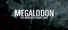 What shark overturns a nice yacht, tears it to pieces, eats crew and disappears without a trace? Megalodon if you believe that malarky :)