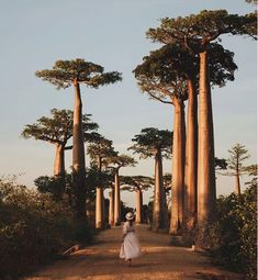 Avenue of Baobab, Madagascar - Africa hidden gems, The most beautiful places in Africa, Best places to visit in Africa, Discover A - Beautiful Places To Travel, Beautiful Beaches, Cool Places To Visit, Places To Go, Travel Around The World, Around The Worlds, African Holidays, Travel Aesthetic, Africa Travel