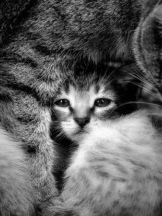 La protecció (protection) | Flickr - Photo Sharing!