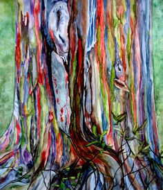 rainbow eucalyptus tree hawaii - Google Search