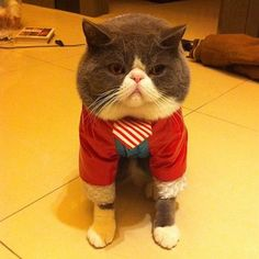 Fancy cat. I love the expression! That's exactly how I feel when someone makes me dress up!