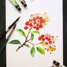 Day 6: Orange Firethorn Berries for today. Simple but beautiful little red pods that are gorgeous. . . . #artistsofinstagram #illustratorsofinstagram #cbdrawaday #inkstruck #flowerillustration #watercolorberries #createeveryday #sketchbookexplorations #sk