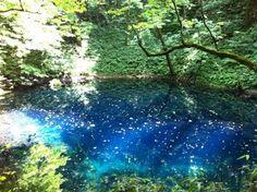 もののけ姫/アシタカの故郷といわれる白神山地 http://spotlight-media.jp/article/150938316001695217