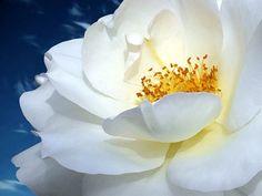 Çiçek dünyasında