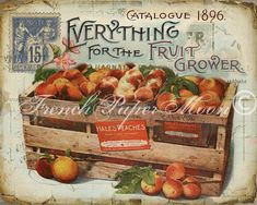 Vintage Digital Fruit Graphic, Vintage Peach Download, Antique Fruit…