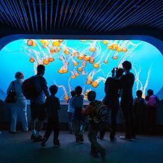 Monterey Bay Aquarium's Ecological Renaissance - Sunset