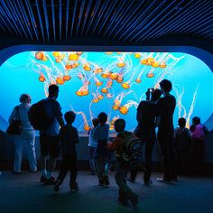 Monterey Bay Aquarium's Ecological Renaissance - Sunset