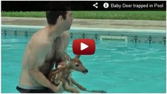 Baby Deer trapped in Pool!! Watch here:  http://gdurl.tk/Fd