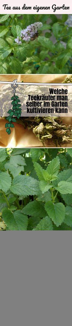 Lecker und gesund, ob Tee oder Kräuterauszüge in Mineralwasser - diese Pflanzen eignen sich!